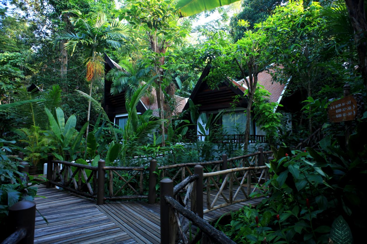 Jungle View Room